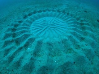 underwater-mystery-circle-2-580x414